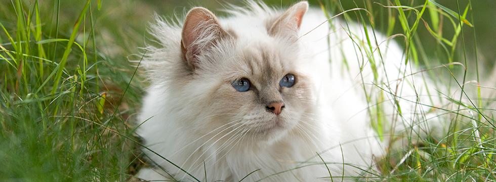 Artgerechte Ernährung Für Katzen Naturavetal Gesundes Katzenfutter