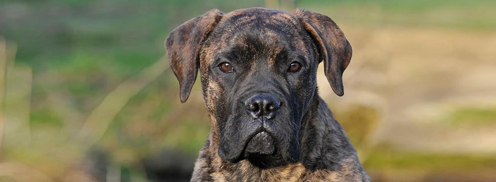 Naturavetal_Eingewoehnung-Hund