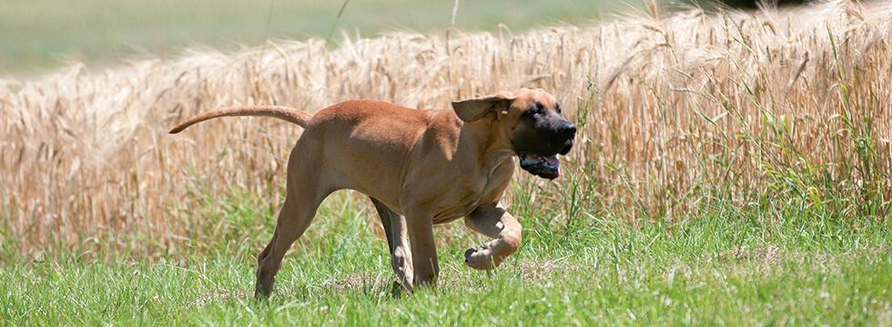 Durchfall Beim Hund Ursachen Fütterungstipps Naturavetal